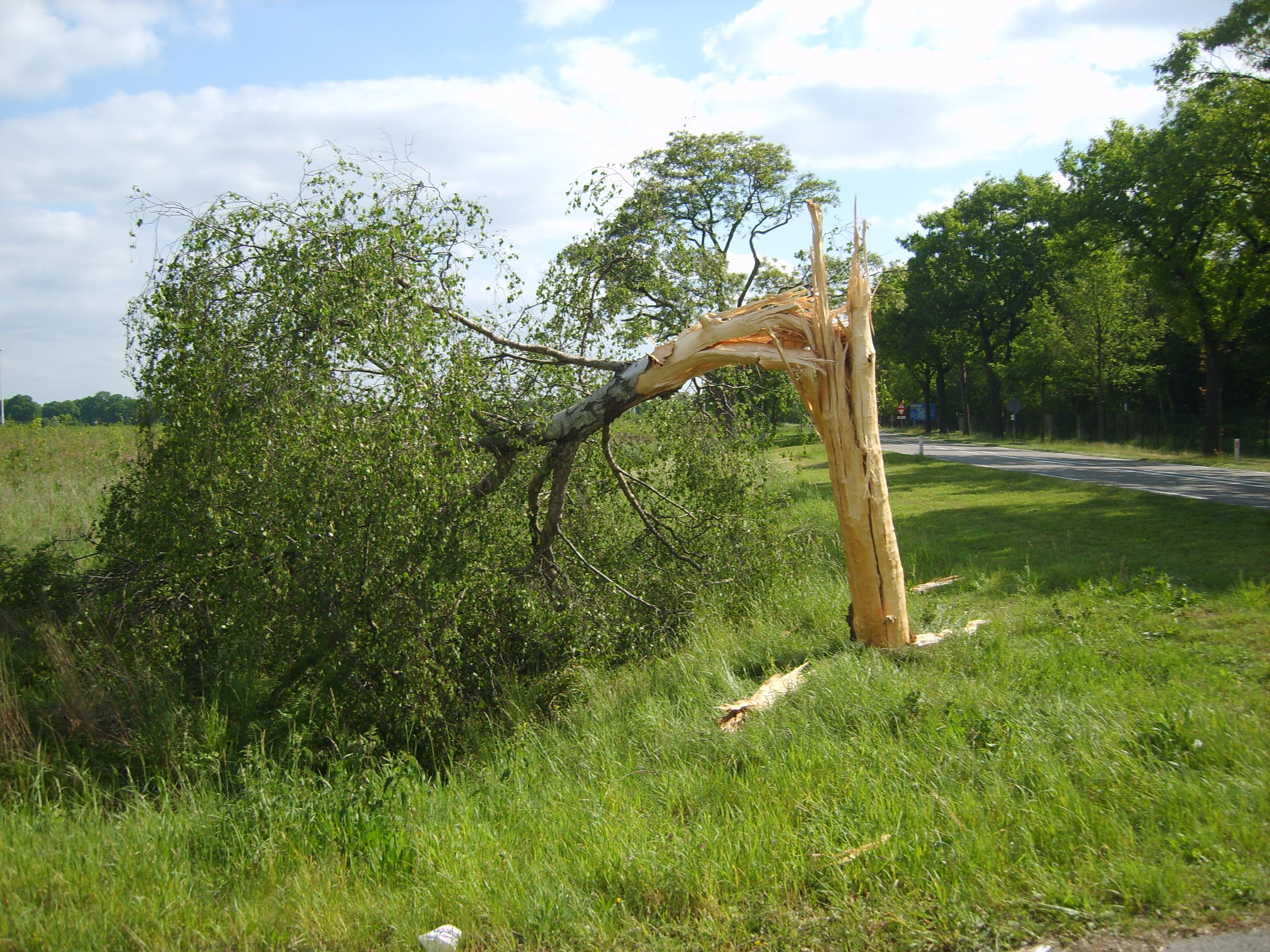 Bliksem inslag in een boom (gelukkig niet in mijn antenne)